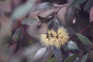Australian wildflowers for bohemian dresses